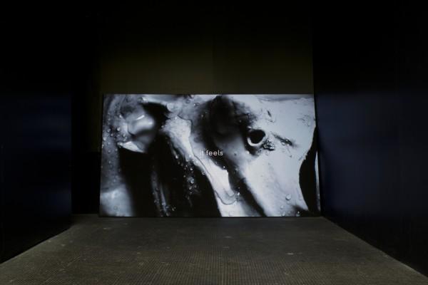 Benedict Drew, The Onesie Cycle, 2013. Installation view.