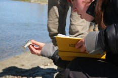 Hayley Wolcott, an undergraduate at St. Andrews University in Scotland, examines a small Mongolian grayling on the shores of Khoton Nuur. She joined the expedition to assist the research of Olaf Jensen, assistant professor at Rutgers University, Department of Marine & Coastal Sciences. (Sarah Kramer/Medill)