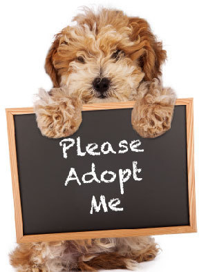 Things to Consider When Adopting a Pet