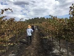 Andrew and Sam in winsome and snow vineyards, small grapegrowers saved by angel funding