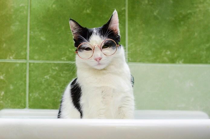 a cat that judges you
