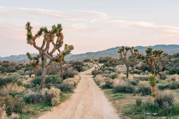 Joshua Tree Dirt Road