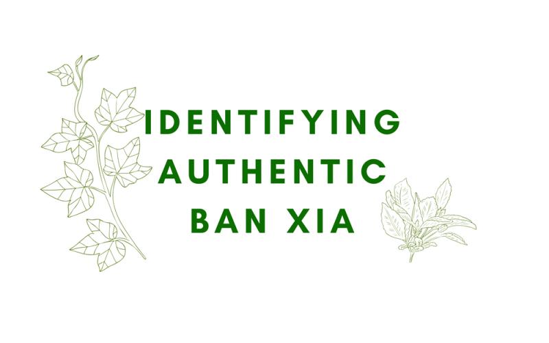 Ban Xia