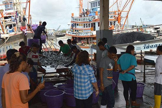 เรือประมงภูเก็ตเริ่มออกหาปลาหลังคลื่นลมทะเลเริ่มลดลง ขณะราคาอาหารทะเลคงราคาสูงเนื่องจากปริมาณปลาที่หาได้ยังมีน้อย