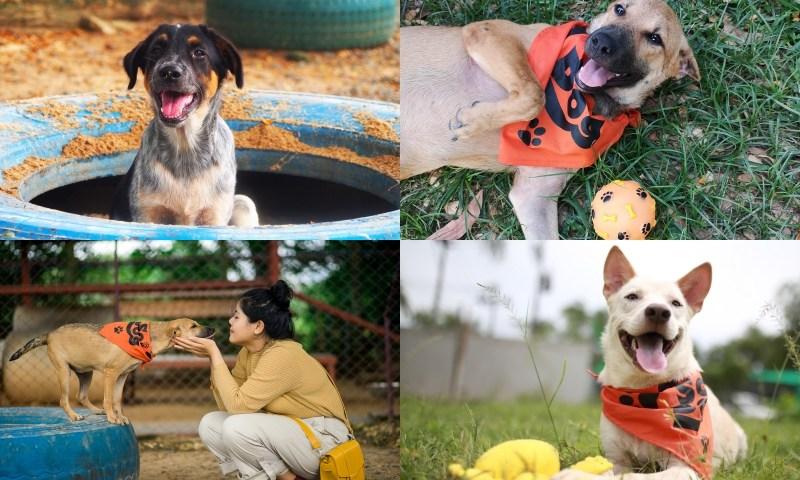 แช๊ะ เปลี่ยน ชีวิต – นิทรรศการหาบ้านให้สุนัขจร