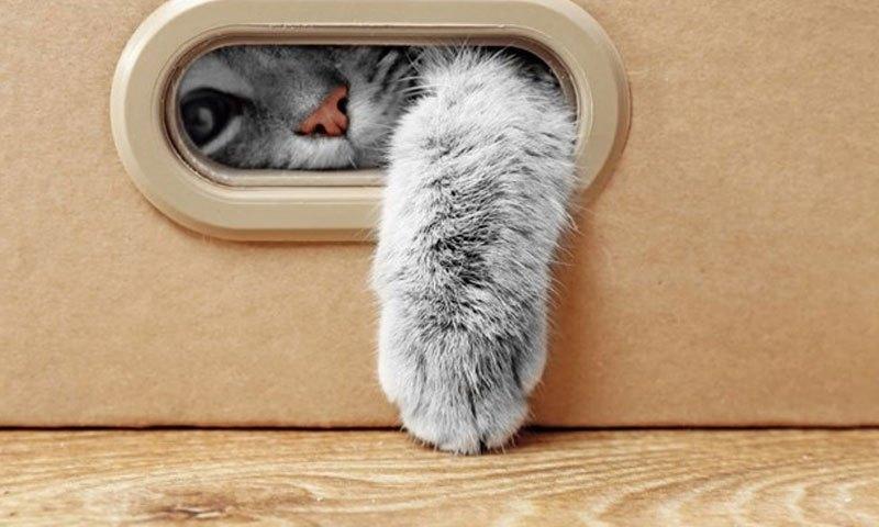 รวม 5 สถานที่รับฝากเลี้ยงแมวที่เหล่าทาสแมวไม่ควรพลาด