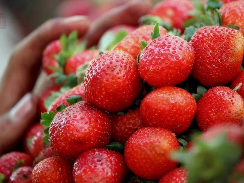Slikovni rezultat za jagode