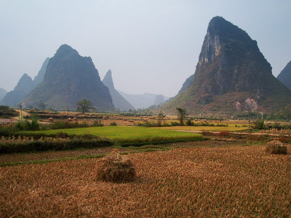 wheat fields in Guangxi, China
