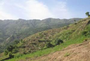 Les défis du reboisement • The challenges of reforestation