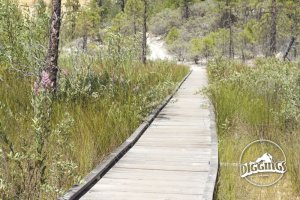 Part of the Diggin's Loop Trail includes a boardwalk allowing hikers a view of the cliffs from the marsh below.