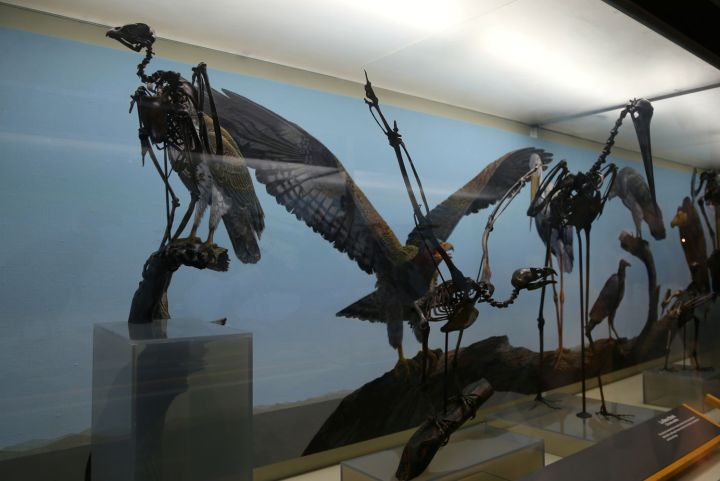 Birds found in the tar pits.