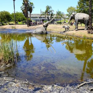 Models of Mammoths in the La Brea Tar Pits
