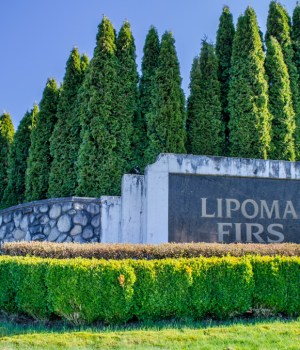 Lipoma Firs
