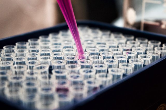 Lumen Bioscience, Seattle, Essential Baking Company, Buchan Baking Company
