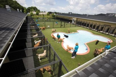 Rover.com, DogVacay.com, dog hotel, san francisco news, bay area news