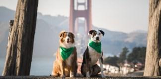 Healthy Spot, San Francisco, SOMA, Mission Bay, China Basin Street