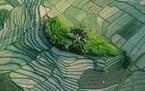 حقول الأرز في بالي، إندونيسيا