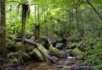 الغابات المطيرة في حديقة ماسولا، مدغشقر