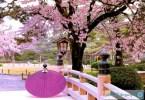 spring-in-Japan-spring-