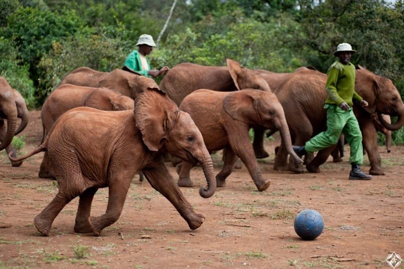مركز تأهيل الفيلة
