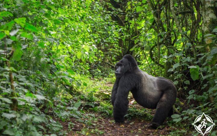 حديقة امبينيترابل بويندي الوطنية