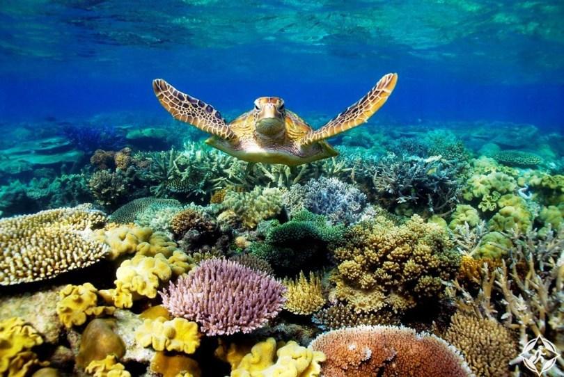 الحاجز المرجاني
