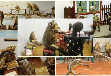 متحف أرض الضفادع