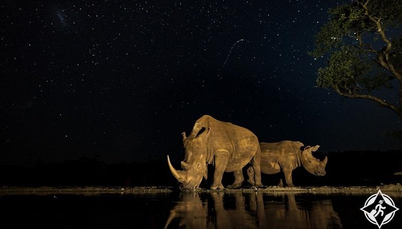 وحيد القرن في جنوب أفريقيا