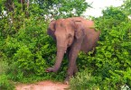 أفضل رحلات السفاري في سريلانكا