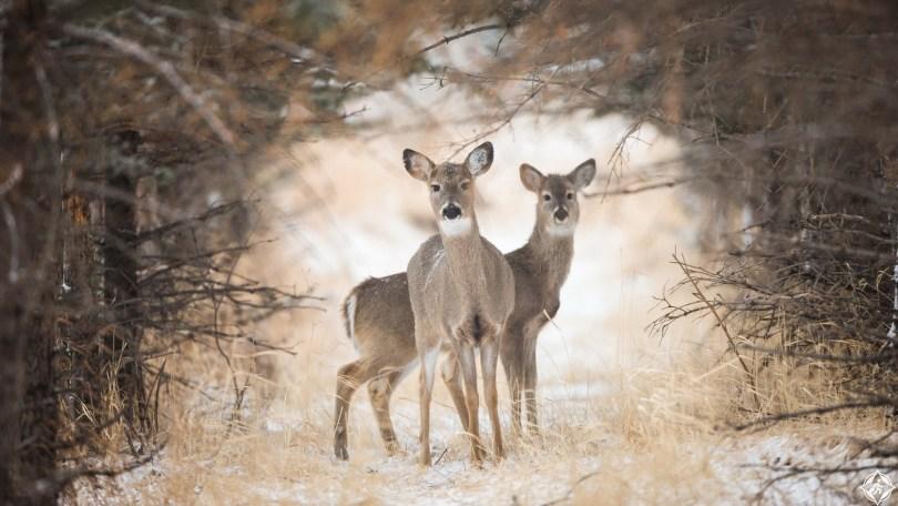 أمريكا-مونتانا-حديقة-مونتانا-يلوستون-الوطنية-ثلوج-منتصف-الشتاء