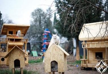 تركيا-أنطاليا-قرية القطط-صور الأسبوع