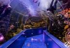 الإمارات-الشارقة-حديقة الأحياء المائية بالشارقة