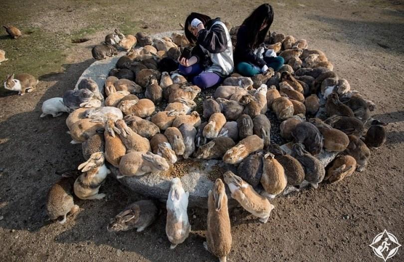 جزيرة الأرنب في اليابان