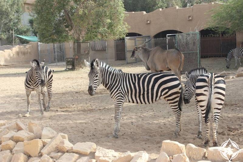حديقة الحيوان بالرياض 8