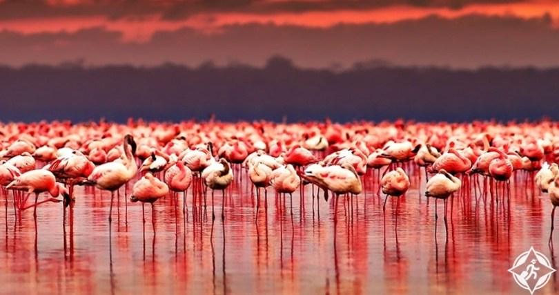 السياحة في كينيا - حديقة بحيرة ناكورو الوطنية