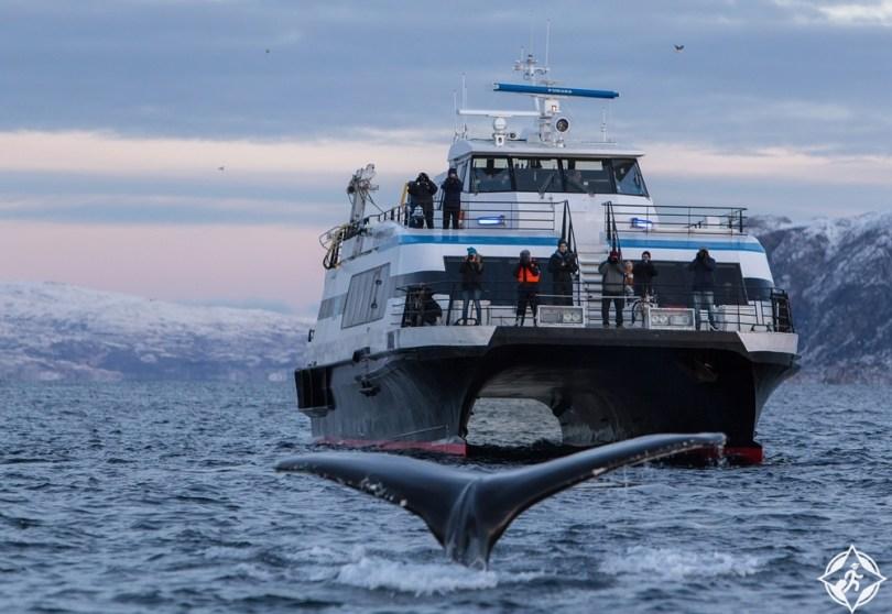 ترومسو - رحلات سفاري الحوت