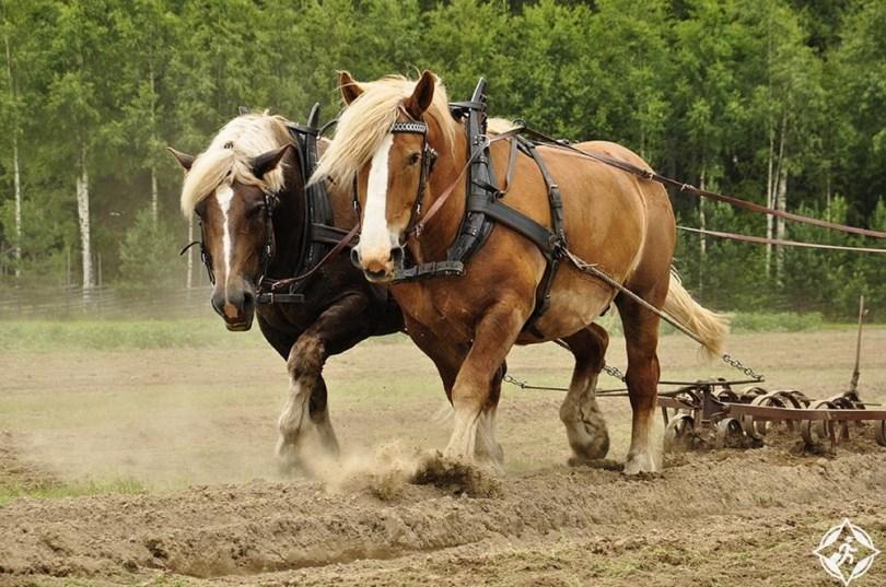 لودلو - مزرعة أكتون سكوت التاريخية
