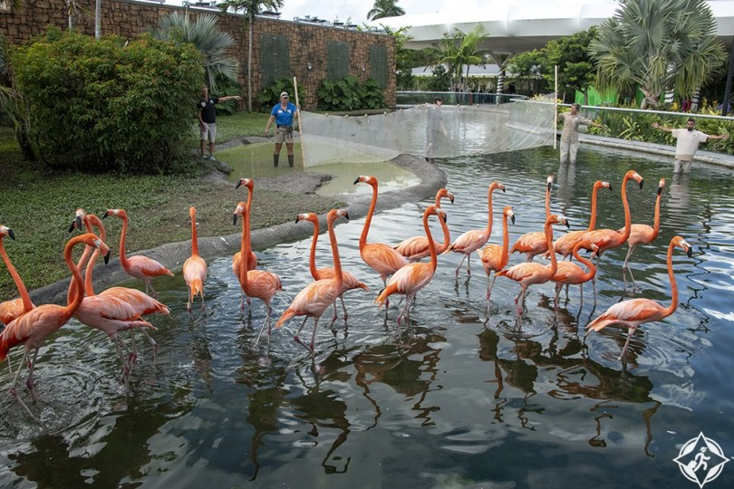 ميامي - حديقة حيوان ميامي
