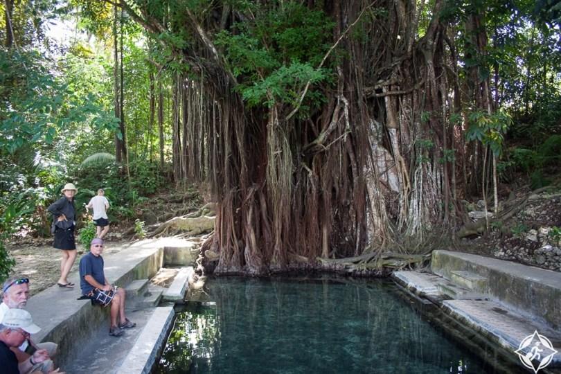 جزيرة سيكويجور - شجرة باليت القديمة المسحورة 2