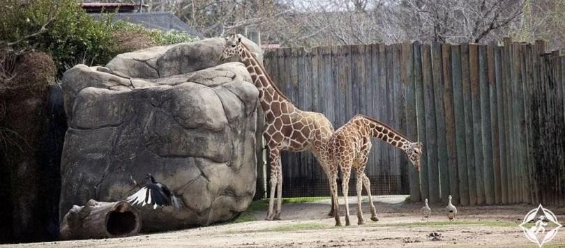 مونتغمري - حديقة حيوان مونتغمري