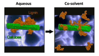 Co-solvents THF and water cause lignin to dissociate from itself and from cellulose, expanding to form a random coil