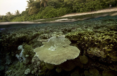 Coral Reefs Provide Valuable Protection For Coastlines