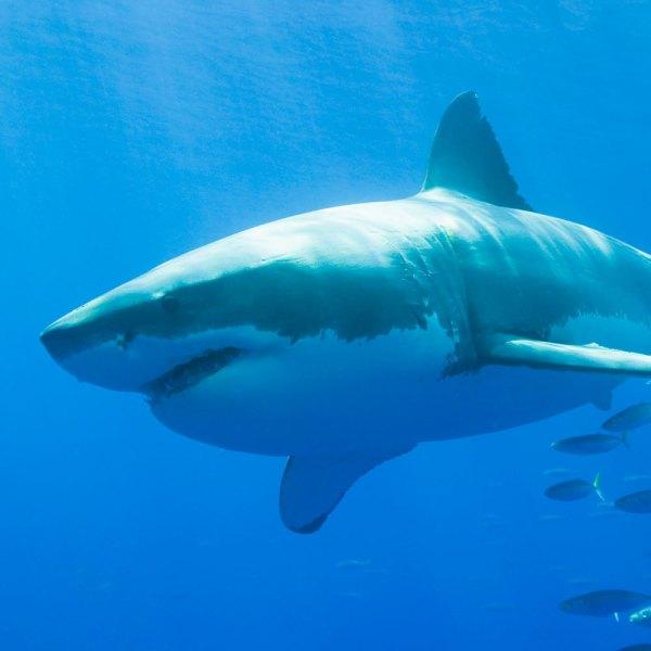 02 Shark attacks hit alltime high in 2015 News