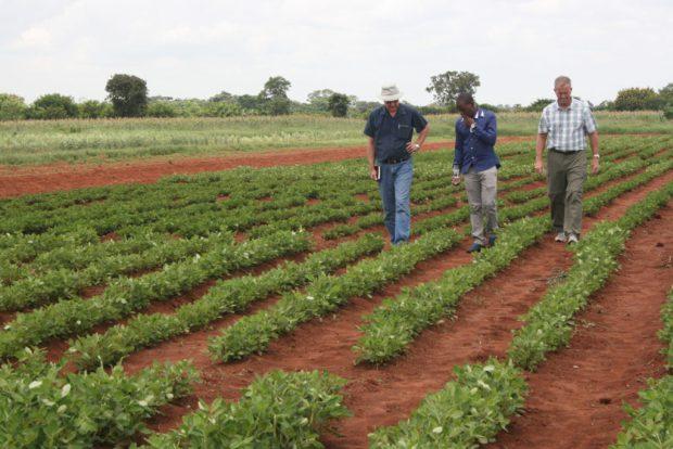 Teachers and student examine a peanut trial field.