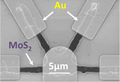 An electron microscope image showing the rectangular gold (Au) electrodes representing signalling neurons and the rounded electrode representing the receiving neuron. The material of molybdenum disulfide layered with lithium connects the electrodes, enabling the simulation of cooperative growth among synapses. Image credit: Xiaojian Zhu, Nanoelectronics Group, University of Michigan.