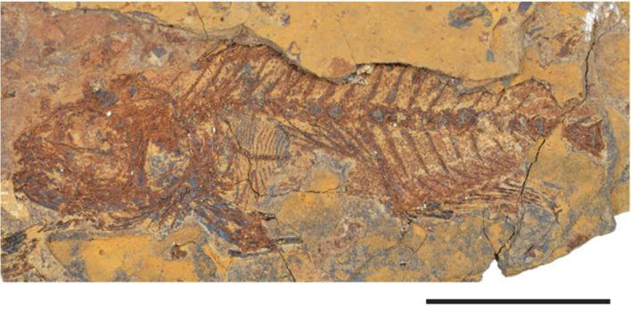 Rock fossil of a fish.