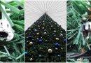 Culmea hoției la Ungheni: Au furat zeci de globuri de pe Cel mai frumos brad de Crăciun din Moldova