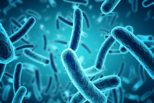Image result for Bacteria