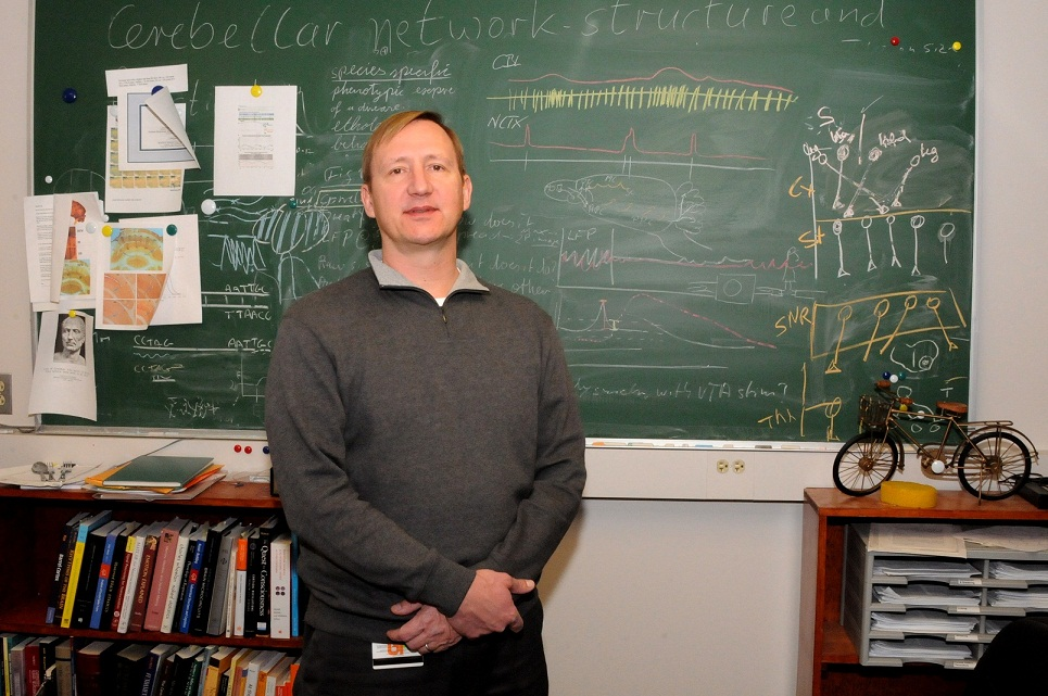 Detlef Heck, PhD, associate professor of Anatomy and Neurobiology at UTHSC, has spent the past 20 years researching the cerebellum.