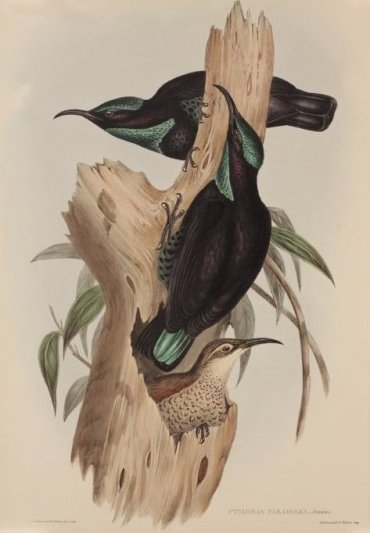 Gould-print